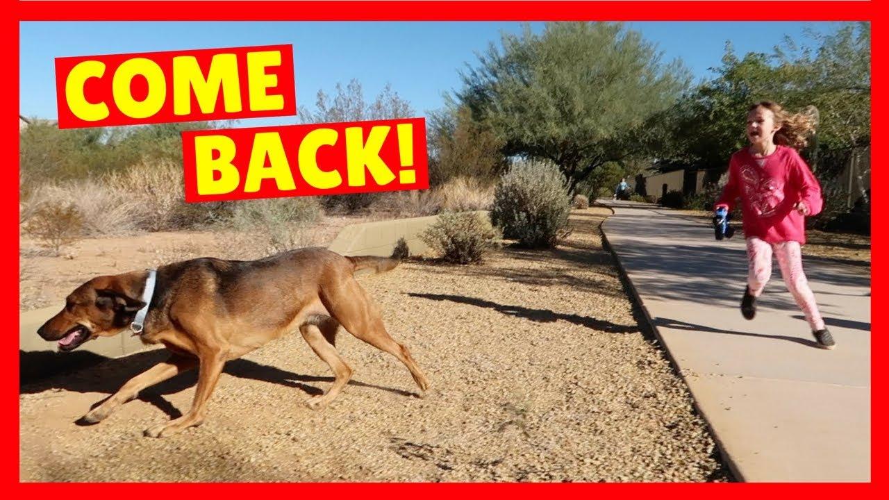 Download Sandy Ran Away 😟 LOST DOG + RV Camping