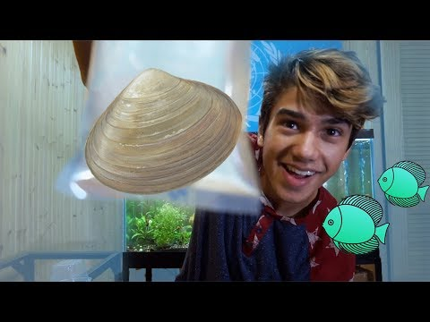 Unboxing 5 FreshWater CLAM'S for My Aquarium!!
