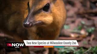 The Milwaukee County Zoo has added three new additions to their ani...