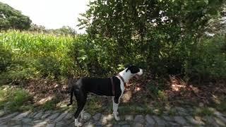 Perros en realidad virtual | Episodio #84