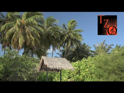 Tropical Zone - Concert Background Video
