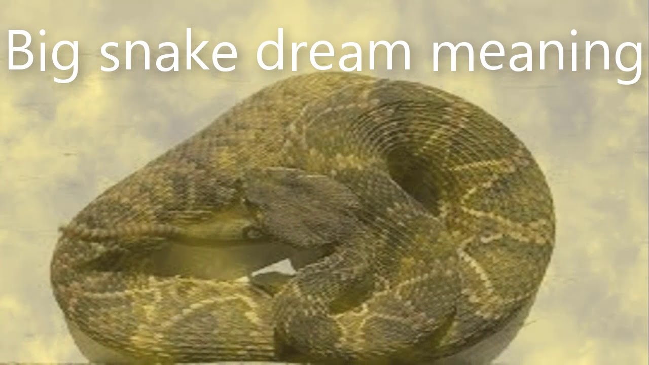 Big Snake Dream Meaning Dreams Meaning And Interpretation Youtube