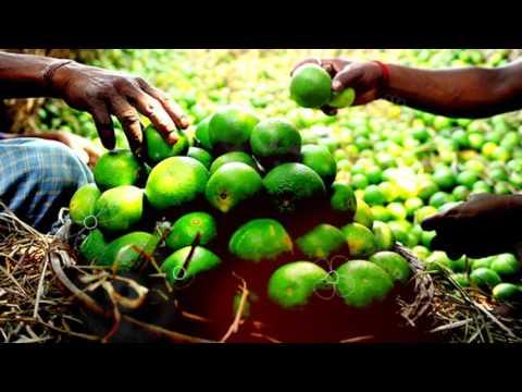 БЕРГАМОТ ПОЛЬЗА И ВРЕД   бергамот в чае это, бергамот и давление, как делают чай с бергамотом