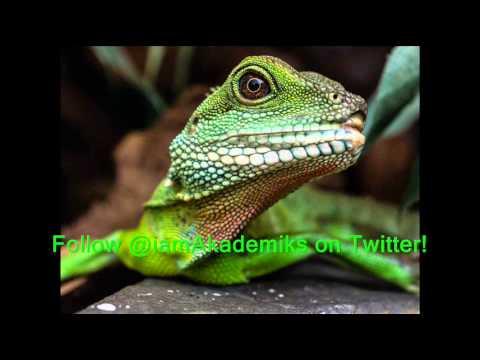 Lizard Squad vs DJ Akademiks (@GDKJordie Love of Chiraq, Sony & Microsoft Takedown)