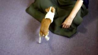 The Lap Dog Training - One