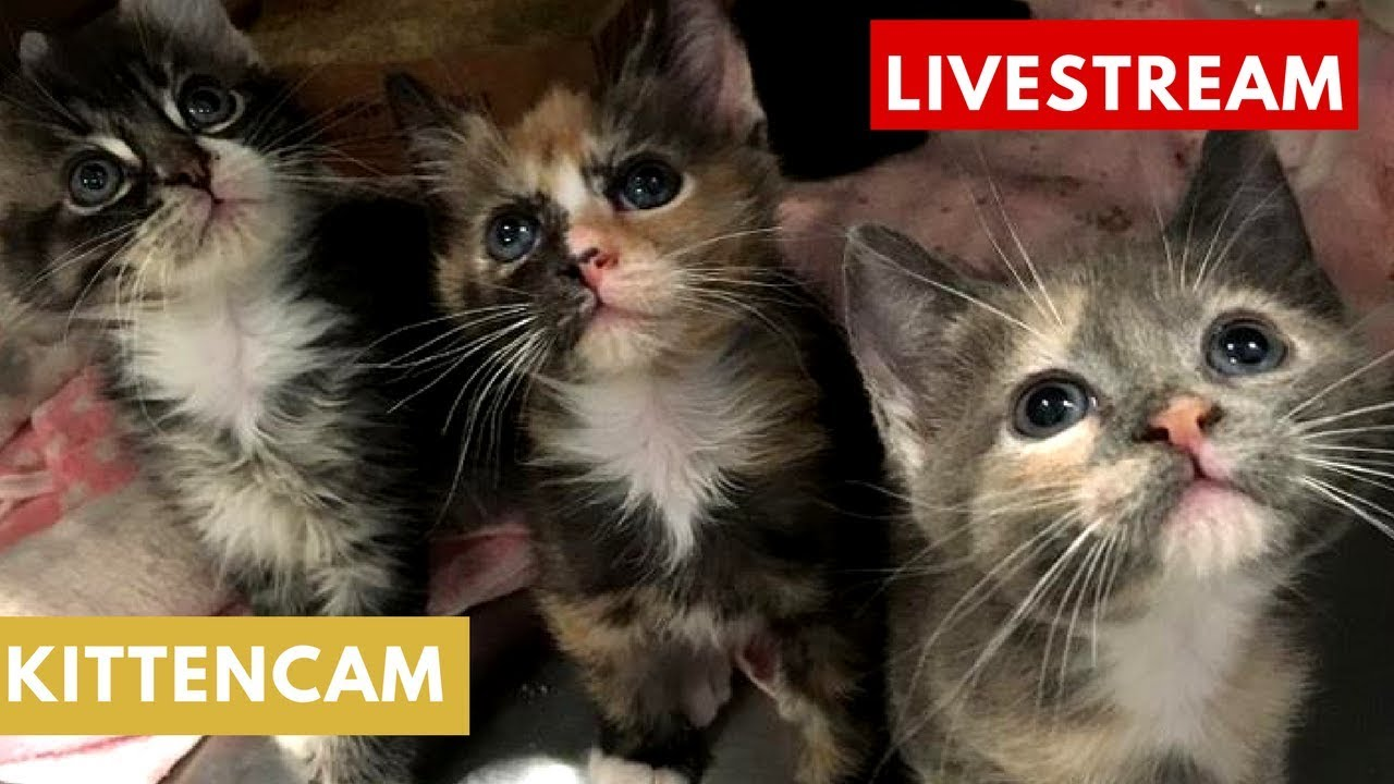 Kitten Cam morning playtime 🐱🐱 Aug 27th powered by cuteavalanche