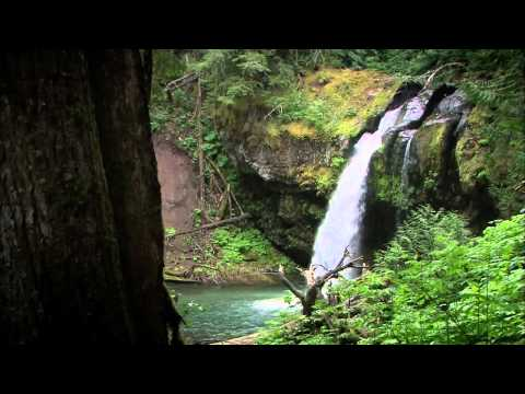 The Real Mount St. Helens : Documentary on the Natural World of Mount Saint Helens