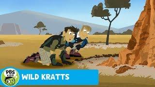 Wild Kratts: Aardvark Breakfast Sludge thumbnail