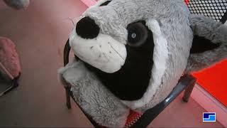 Mein Waschbär-Maskottchen-Kostüm / My Raccoon Mascot Costume