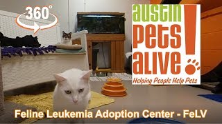 Austin Pets Alive FeLV | Feline Leukemia Adoption Center
