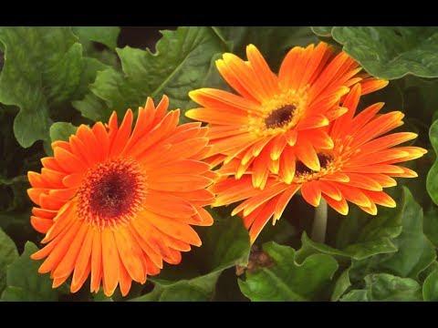 Ампельные растения: выбор и уход
