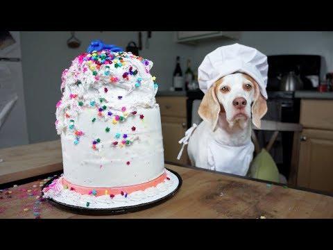 Chef Dog Bakes Cake: Funny Dog Maymo
