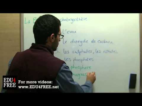 La photosynthèse - Chapitre 1 - La Biologie - edu4free