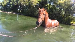 horses in the thousand islands