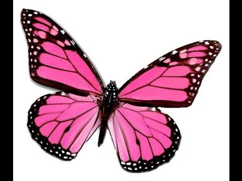 Pink Butterfly Animation - YouTube Animated Pink Butterflies