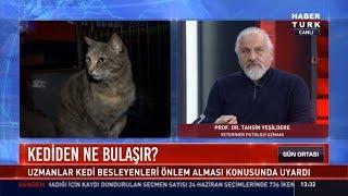 Kedi besleyenler dikkat! - Veteriner Patoloji Uzmanı Prof. Dr. Tahsin Yeşildere