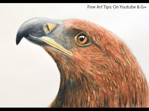 Drawing a Golden Eagle's Head With Watercolor Pencils
