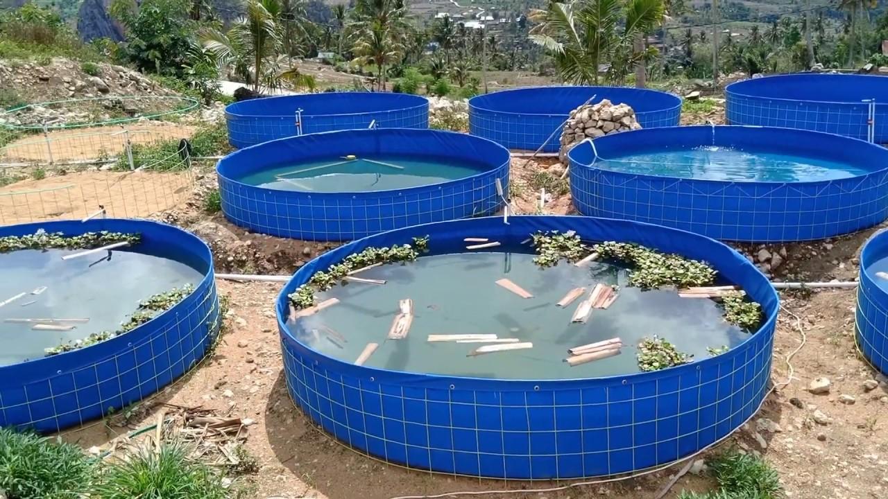 Kolam Terpal Percontohan Untuk Budidaya Ikan Lele - YouTube