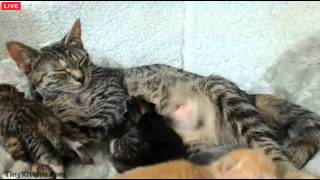 Tiny Kittens Shelly bottle feeds Tiny then Tip steals Tiny at about 31 mins kinda funny