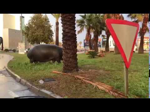 Un hipopótamo se escapa de un circo instalado en Roquetas de Mar