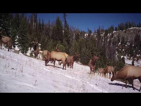 On The Elk Trail: Episode 2 - Elk Migration