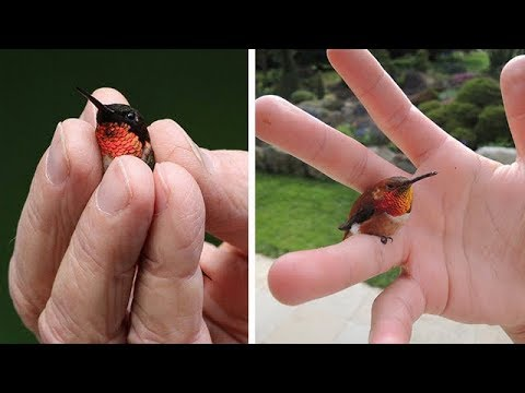 IMUT DAN MENGGEMASKAN...!!! Inilah 10 Burung Terkecil di Dunia