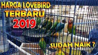 harga lovebird terbaru 2019 || BAMIS LOVEBIRD farm