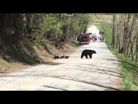 The Road to Mama Bear