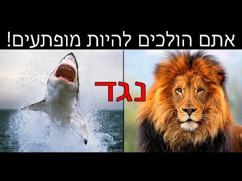 מהי החיה הכי מסוכנת בעולם? | (הידעתם? פרק 1)