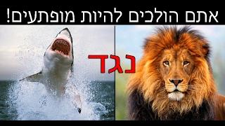 מהי החיה הכי מסוכנת בעולם?   (הידעתם? פרק 1)