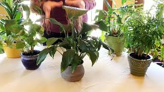 The Secret to Successful Houseplant Repotting
