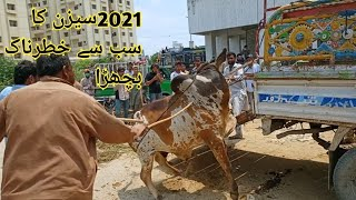 Eid 3rd day Ka gift Season 2021ka Sab se khatarnak Bachra Out of control Bull season 2021