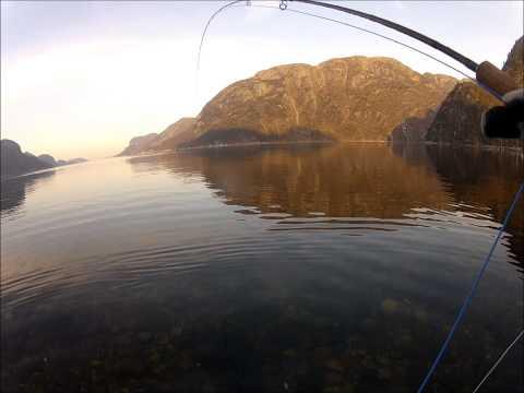 Sjøaure fiske i Rogaland.
