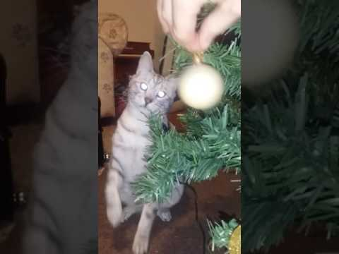 Cat knocking over Christmas tree