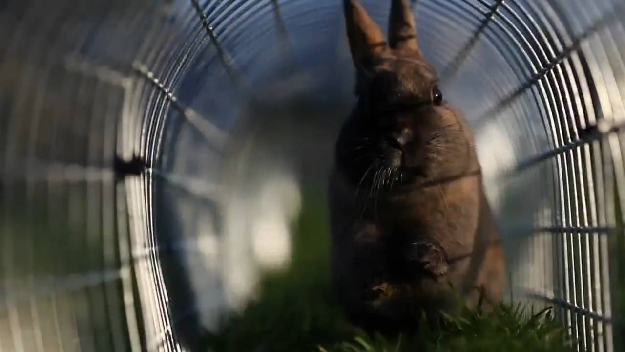 Runaround The Best Place For A Rabbit Youtube