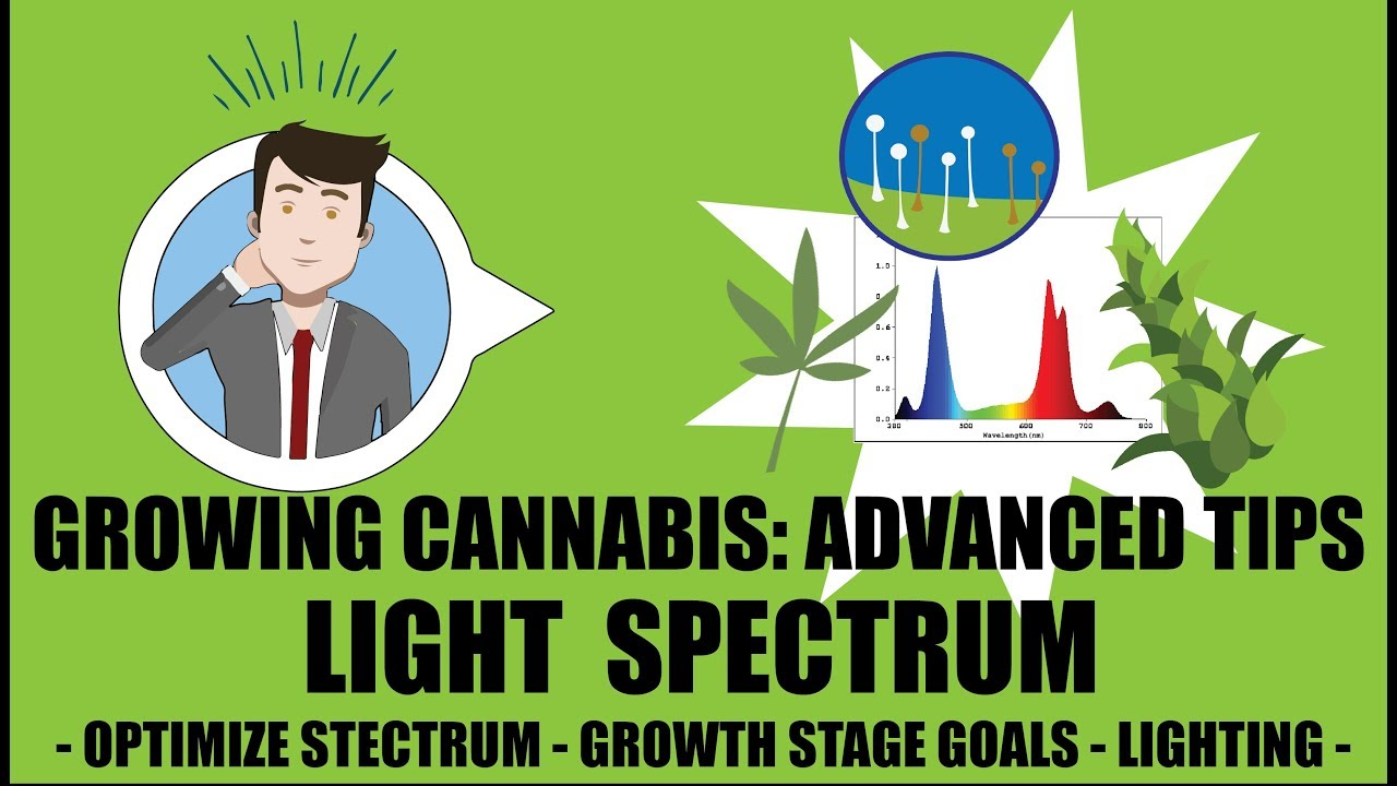 What light spectrum does weed need to grow? - Growing Cannabis 201: Advanced Grow Tips