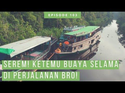 Susur Sungai Sekonyer Di Taman Nasional Tanjung Puting Naik Perahu Kelotok [ Wisata Kalimantan ]