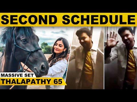 SHOCKING: தள்ளிப்போகும் தளபதி 65 படப்பிடிப்பு - Vijay எடுத்த முடிவு..! | Nelson | Pooja Hedge | News