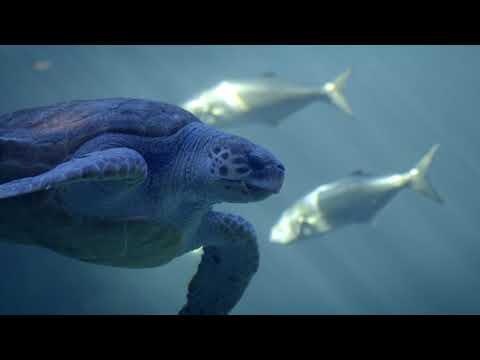 ZOOпарк: Новогодний фирменный ролик телеканала