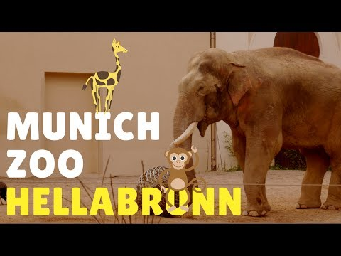 Munich Zoo Hellabrunn 2017 - Travel Germany [4K]