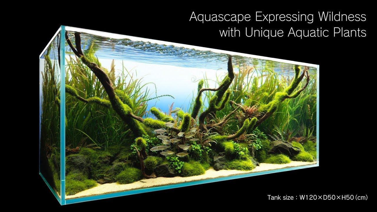 Adaview Aquascape Expressing Wildness With Unique Aquatic Plants Youtube