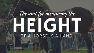 How find out horse height: HANDS as a unit of measurement