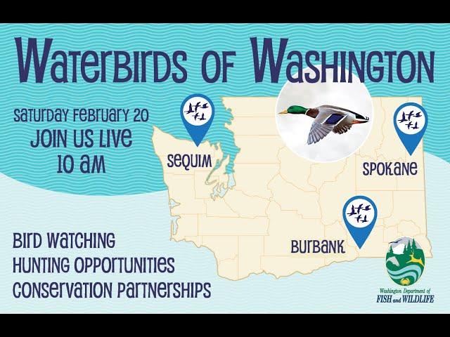 Waterbirds of Washington