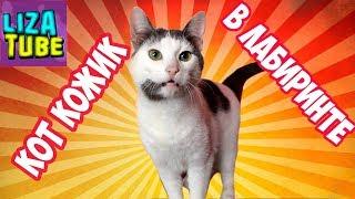 Лабиринт для кошек 😺 Кот Кожик проходит новый лабиринт 👍 LizaTube