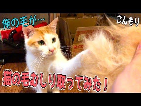 暑��������゙猫�毛を���らむ�り������