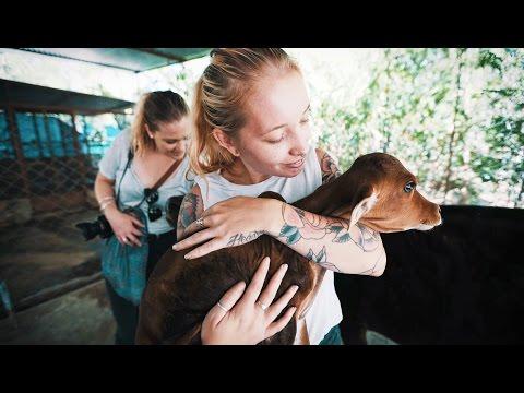 Animal Aid Unlimited (Udaipur)