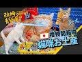 ►拉姆有幾噗◄大阪來開箱!神奇貓舌頭梳 不愛梳毛的主子也愛翻了┃Omiyage for cats from Osaka ☁