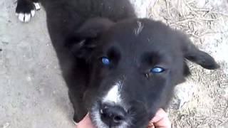 щенок с ангельскими глазами