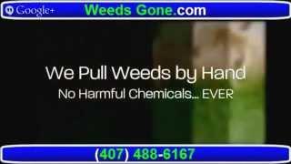 Weed Control Service Orlando FL