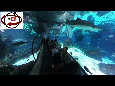 Amazing Underwater Tunnel  360° video - Barcelona Aquarium